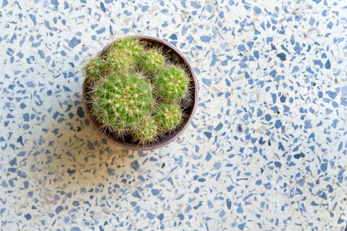 Cactus in small flowerpot on terrazzo floor